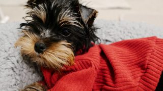 My fave Australian brands for dog clothes and accessories