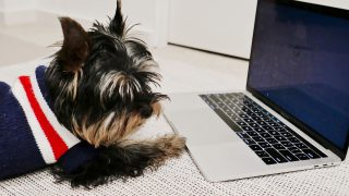 Working from home with a yorkie puppy